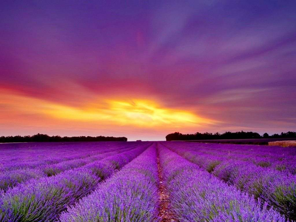 nature-landscapes_other_lavender-field_4166