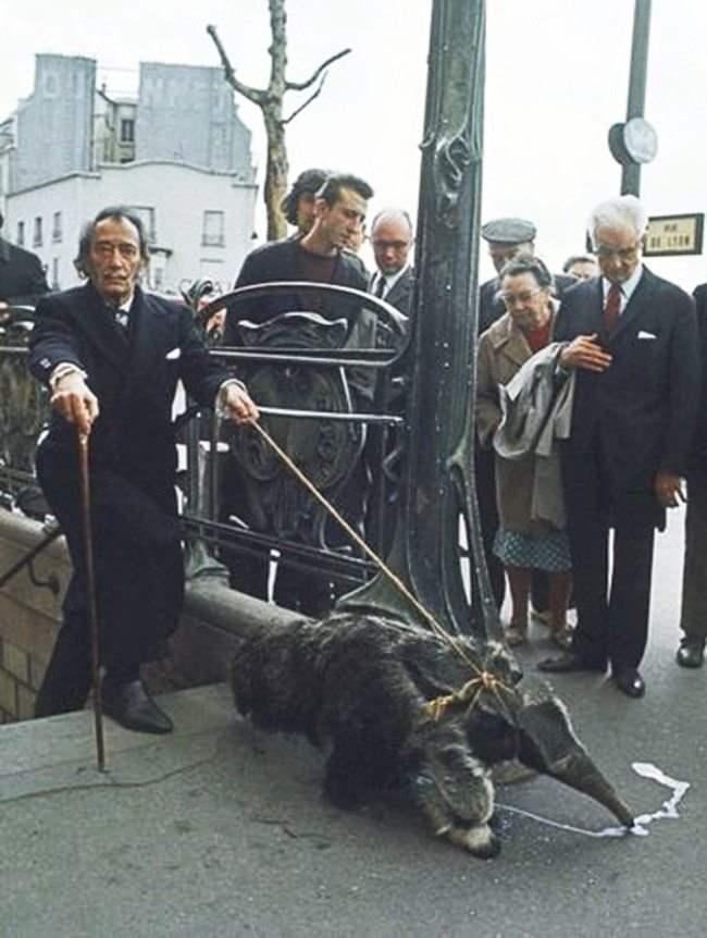 Сальвадор Дали с домашним муравьедом выходит из метро, 1969 год. Мало кто знает, но питомцем эксцентричного художника был гигантский муравьед. Дали часто выгуливал своего экзотического друга на золотом поводке по улицам Парижа и являлся на светские приемы, держа его на плече.
