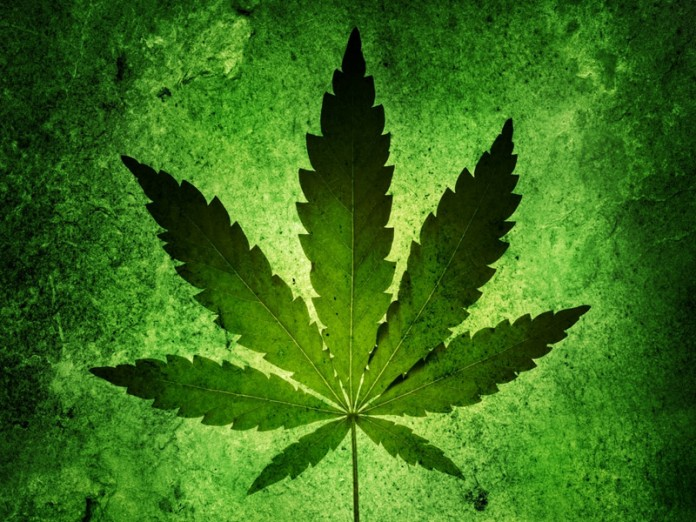 an overview of the black markets use of cannabis sativa