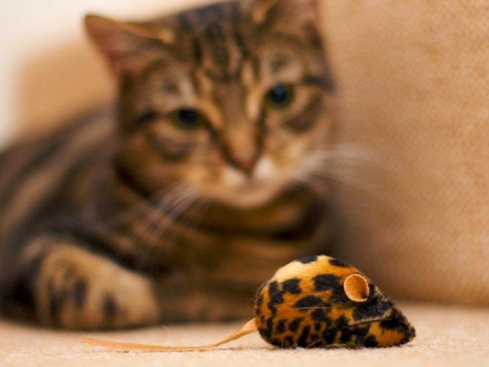 Девушка купила своему коту игрушечную мышь