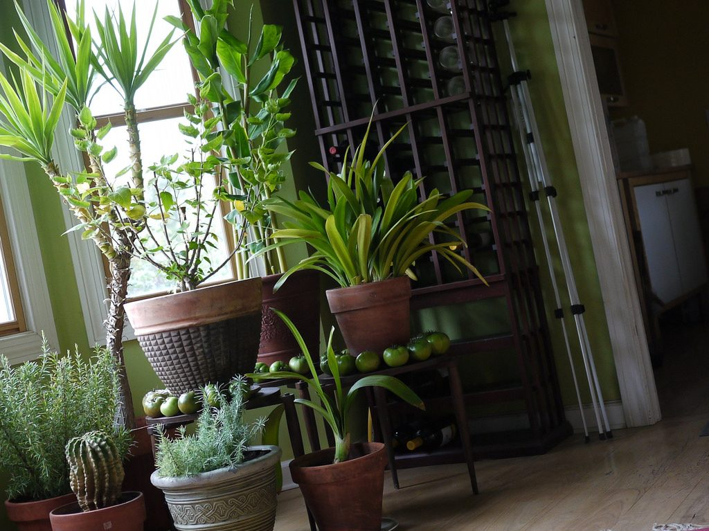 Как я на мужа оставила свои растения на две недели