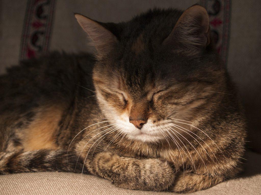 Как моему брату приходилось спать с котом за компанию