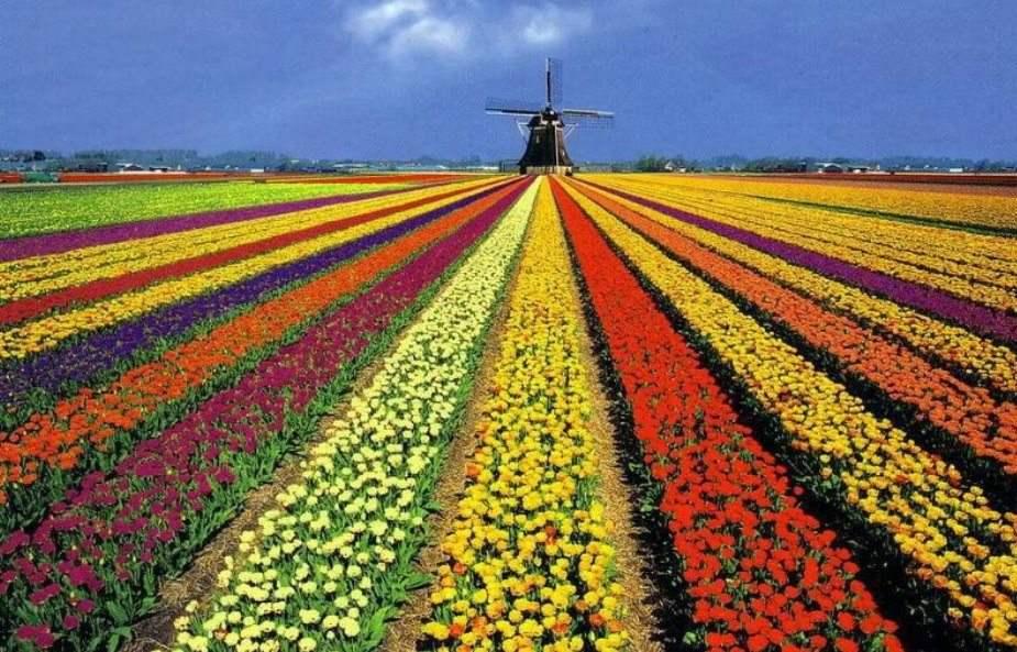 beautiful-holland-01