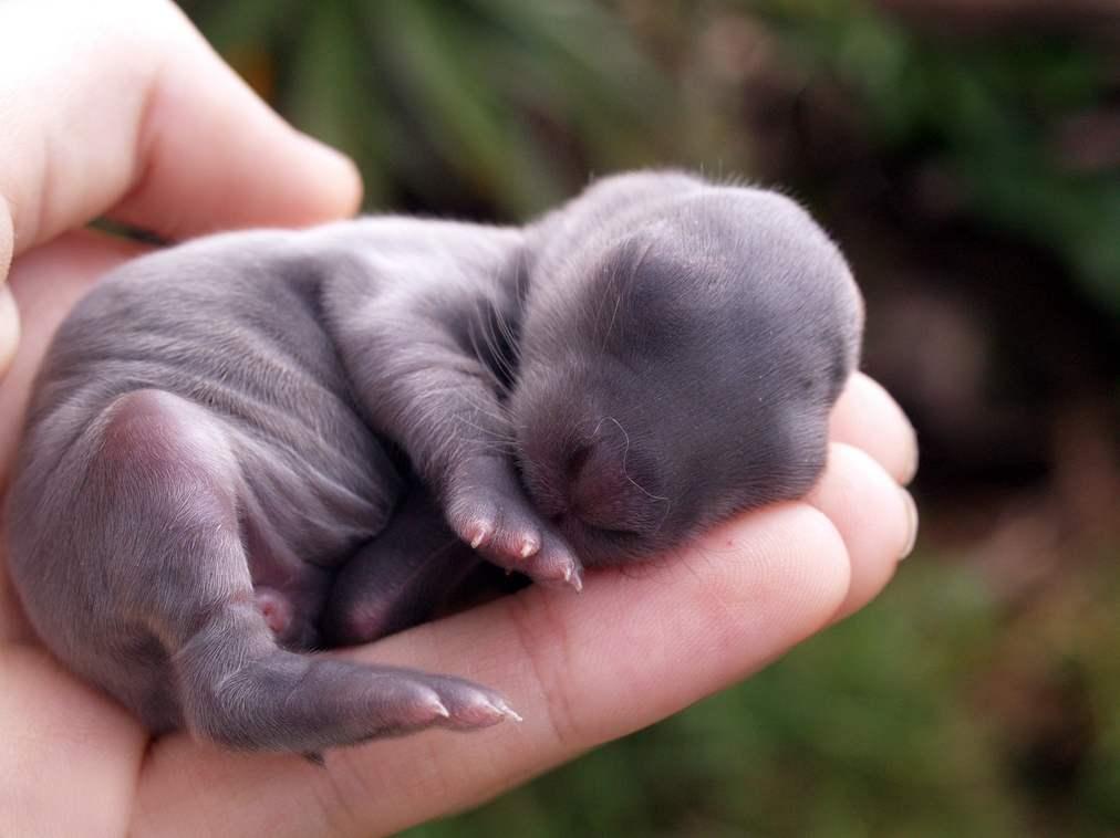 Маленький кролик