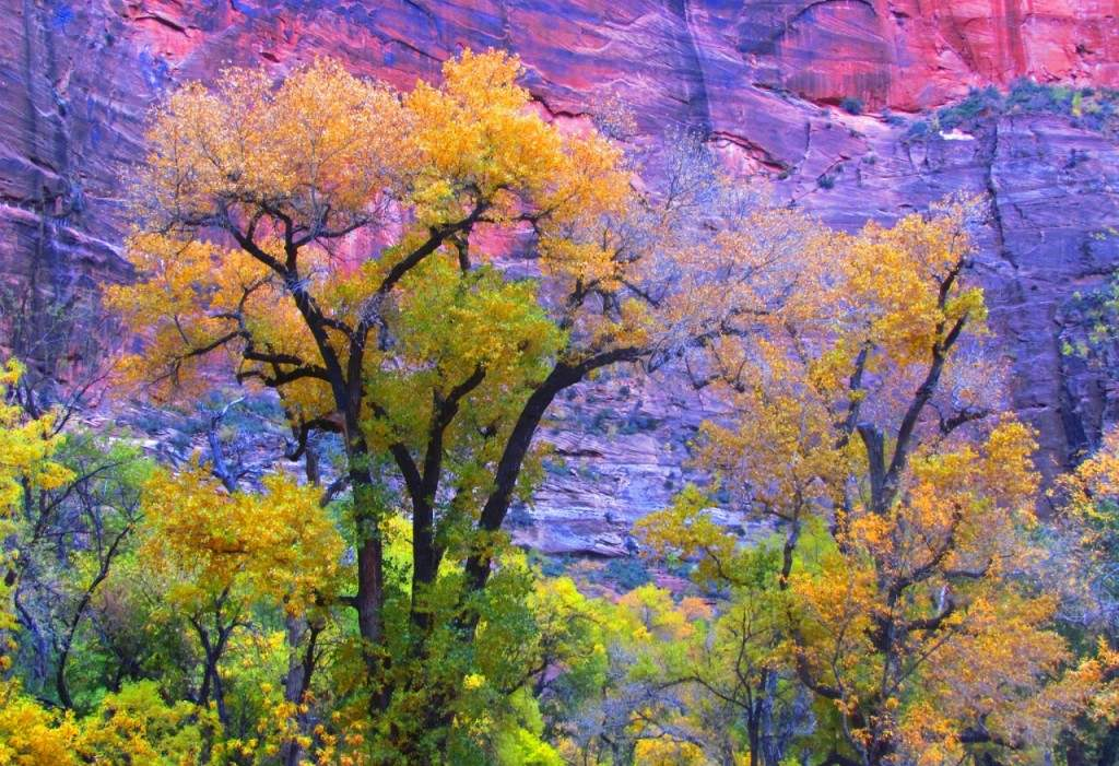 USA_Autumn_Parks_Utah_442081