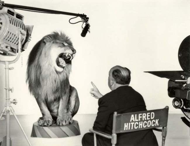 Альфред Хичкок, руководящий львом во время съемки легендарной заставки студии Metro-Goldwyn-Mayer, 1958 год.