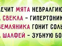Восхитительный стих о целебных травах. Сохрани и пользуйся на здоровье!