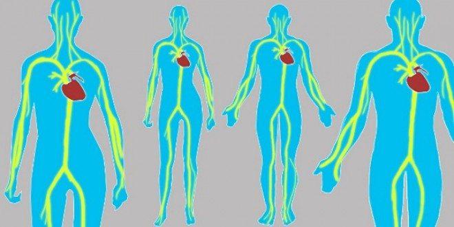 10 способов предупредить болезни сердца, понизив уровень холестерина