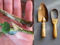 Натуральные средства для стимуляции роста корней растений. На радость всем садоводам!