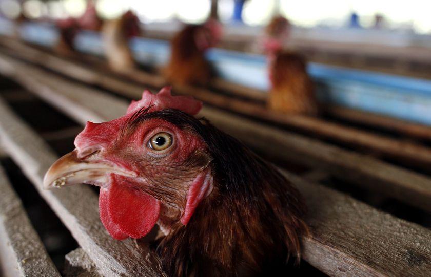 Я В ШОКЕ! После просмотра ЭТОГО видео ты больше никогда не захочешь покупать яйца!