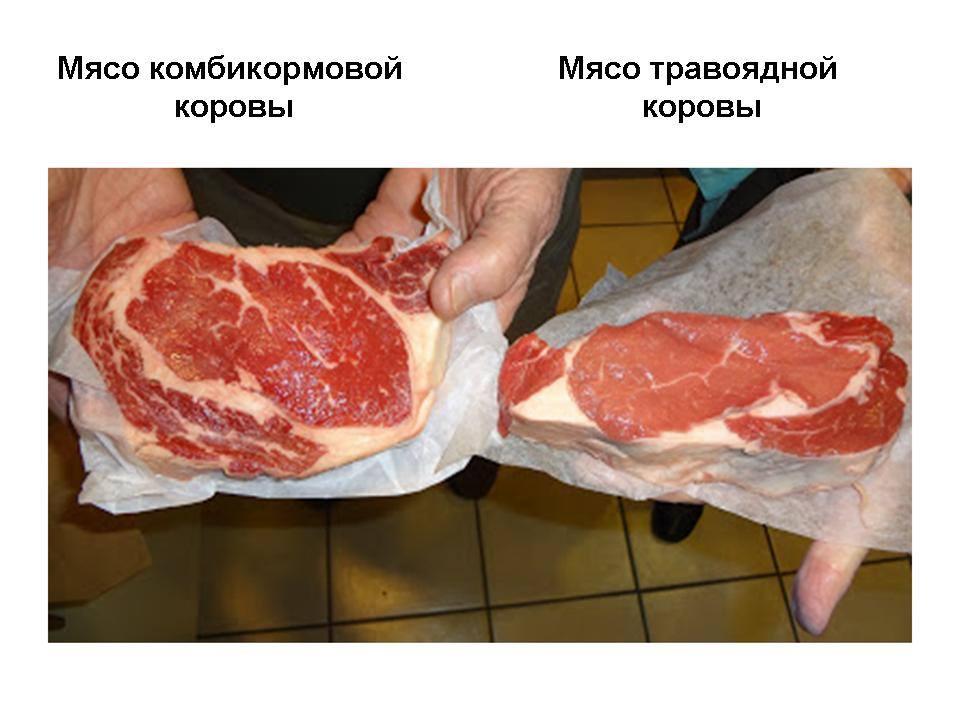 Вот как правильно выбирать мясо в магазине!