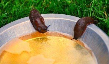 Он насыпал кофе в пепельницу и поджег… Наконец-то в саду можно спокойно отдыхать!