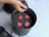 Он положил 4 ломтика помидора в емкость с почвой. Вот что произошло через 12 дней…