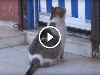 Беременная кошка пришла в медицинский центр за помощью