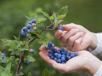 ТОП 10 Самых полезных продуктов для продления жизни.