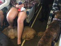 Эта авиакомпания разрешила своим пассажирам перевозить животных. Причина — удивительна...