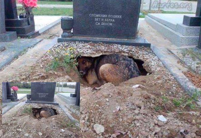 Эта собака осталась преданной своему хозяину даже после его смерти. Очень проникновенная история...