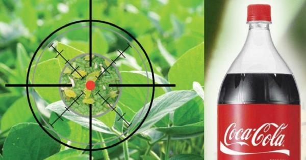 Напои тлю «Кока-колой» до смерти: убойный напиток!