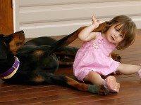 2-летняя девочка играла с доберманом. Внезапно пёс оскалился на малышку...