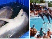 Что творится за кулисами шоу с дельфинами. Шокирующая правда, раскрывающая глаза на многое!