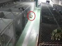 Камера слежения зафиксировала странную картину. Увидев ее, работники приюта сильно удивились…