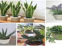 5 растений для вашей спальни, которые очистят воздух и помогут лучше спать!