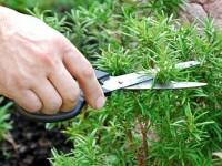 Знаете ли вы, что это растение из вашего сада может помочь бороться с выпадением волос?