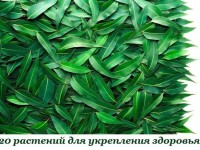 20 растений для укрепления здоровья