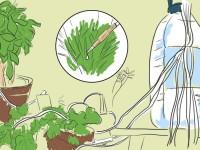 Растения будут поливать себя сами! Автоматическая система, продуманная до мелочей.