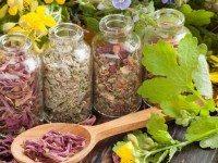 Лучшие противопаразитарные растения — это необходимо знать!