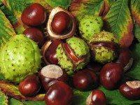 Каштан — это единственный орех с витамином С !