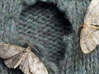 Народные методы борьбы с молью: не оставь насекомому ни единого шанса!