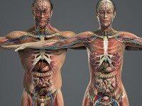 Осторожно! Продукты, которые уменьшают плотность костей