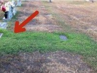 Родители не могли понять, почему трава на могиле их 36-летнего сына остается зеленой. Узнав причину, мать не смогла сдержать слез.