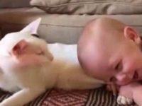 Малыш схватил кошку за задние лапы. Мама сняла все на видео, и теперь весь мир смотрит, не отрываясь.