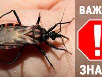 Если вы заметите этого жука у себя дома, срочно вызывайте специальные службы! Не пытайтесь устранить его самостоятельно!
