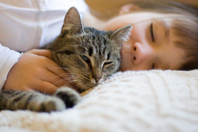 Удивительная польза для здоровья, которую Вы получите от кошачьего урчания!
