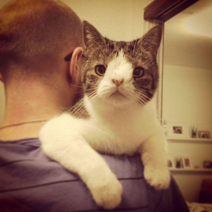 Он забрал «самого ненужного кота» в приюте. В первую же ночь Монти преподнес сюрприз…