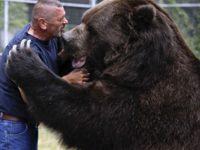 Увидев мужчину, 680-килограммовый медведь бросился к нему. То, что было дальше… Мурашки по коже