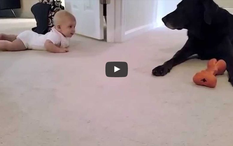 Эта малышка поползла в первый раз. Что сделает собака? Невозможно перестать смотреть!