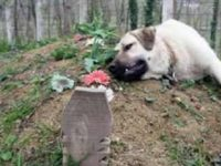 Когда сын пришел навестить могилу отца, он увидел там собаку. Какая трогательная сцена!