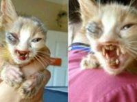 На этого изуродованного котенка нельзя было смотреть без слёз. Ты только посмотри, КАКИМ он стал теперь.