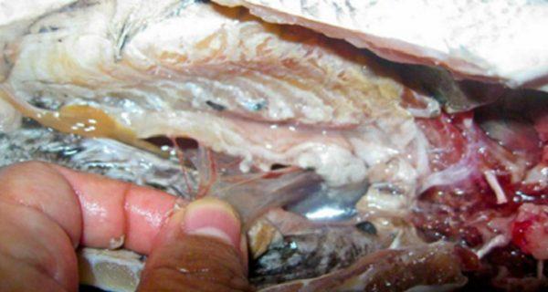 CNN предупреждает – не употребляйте это! В этой еде содержатся черви, которые могут нанести вред Вашему здоровью.