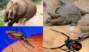 Как вы считаете, какое животное самое опасное на планете?
