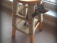 Домашний скалодром, уголок для релакса и еще 5 реальных способов понравиться своей кошке