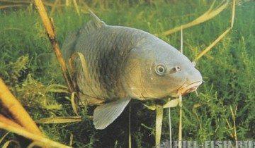 Решили с мужем приготовить рыбу на ужин