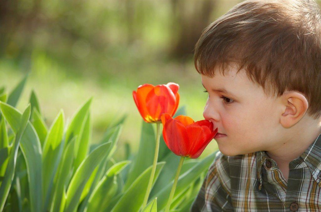 Boy smelling tulip