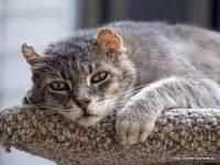 Про жизнь одного кота