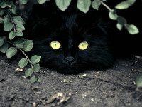 Про кота Васю