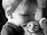 «Продаются котята»